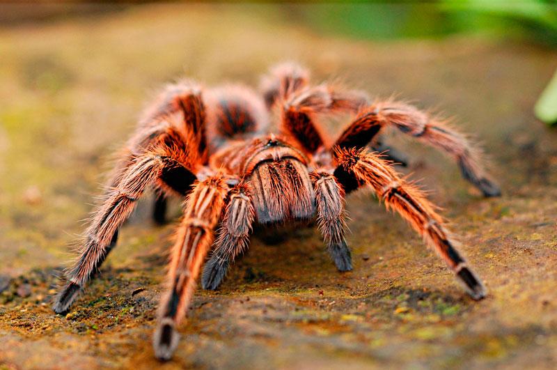 Fobia las arañas