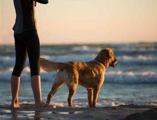 13 beneficios de tener mascotas en casa.